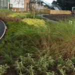 Ornamental Planting, Appleton Academy