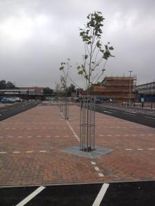 urban-tree-planting