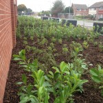 tesco-immingham-planting