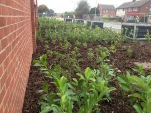 tesco-immingham-planting