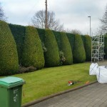 Meticulous hedge pruning
