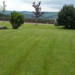Treecare and Lawn Treatment