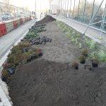 University of Huddersfield Landscaping 4