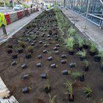 University of Huddersfield Landscaping 5