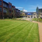 Redwood Glades Care Home landscaping 9