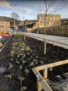 Dewsbury Learning Quarter soft landscaping 3