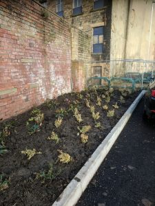 Dewsbury Learning Quarter soft landscaping 2